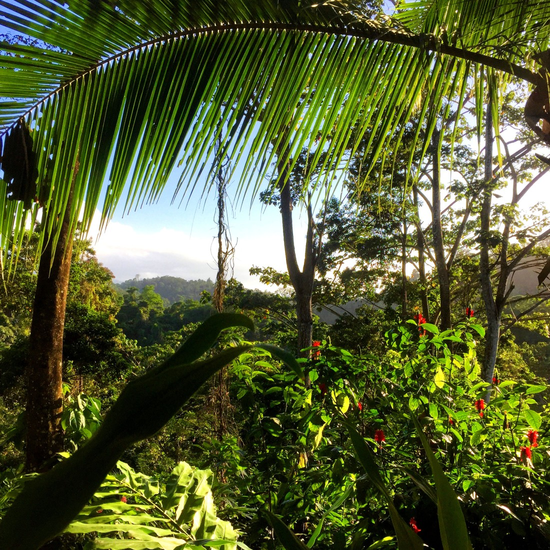 jungle finca inti