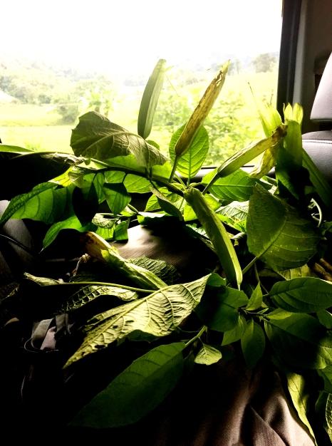 plantes en voiture