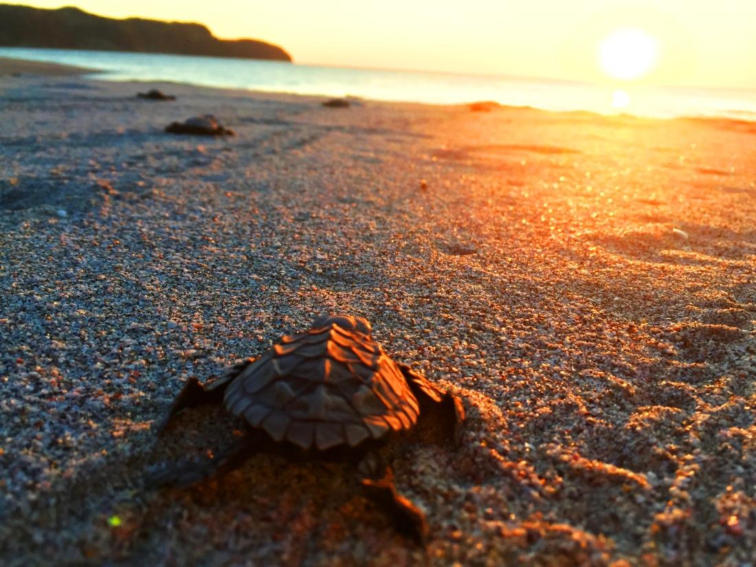 tortue bebe coucher de soleil.jpg