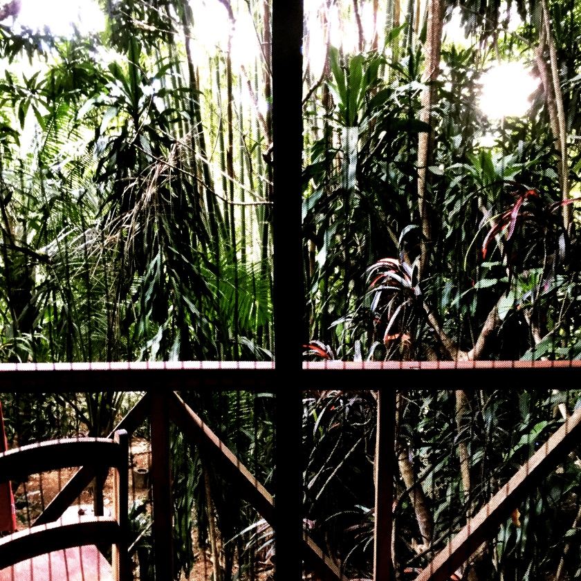 rideau-jungle-montezuma.jpg