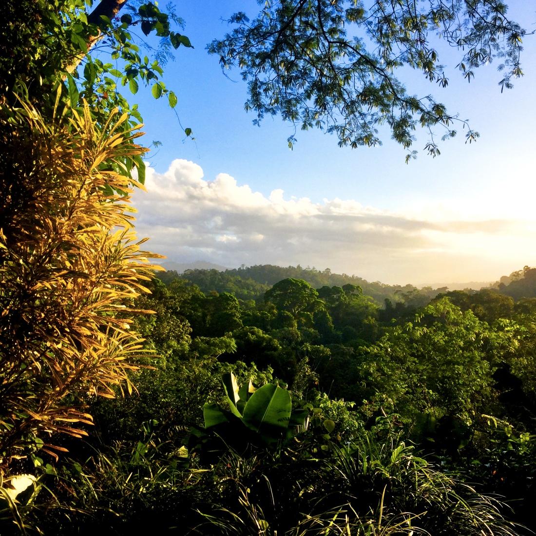 mirador-jungle-golden