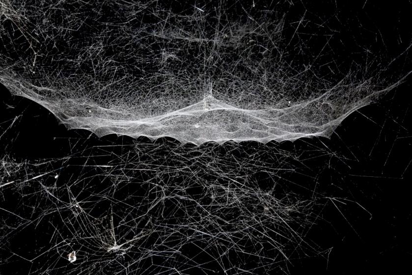 saraceno_spiderweb_web.jpg