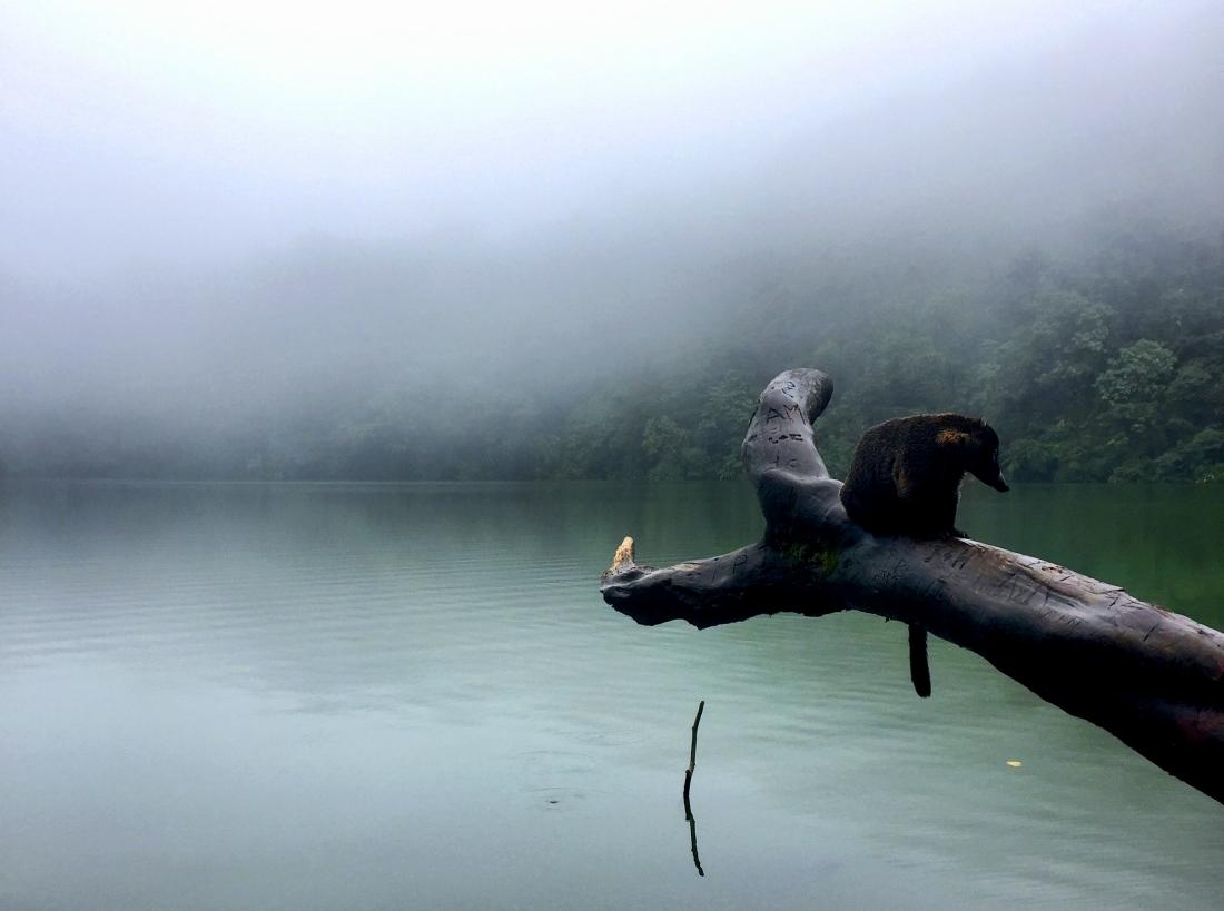 coati-lake.jpg