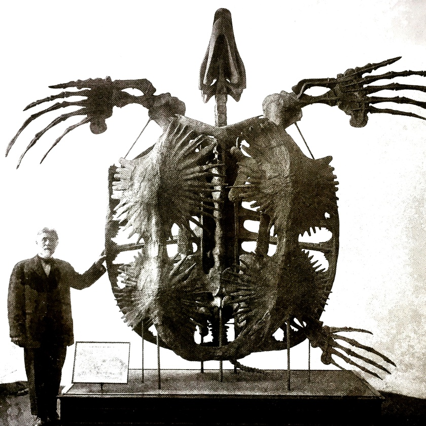 giant-turtle-skeleton