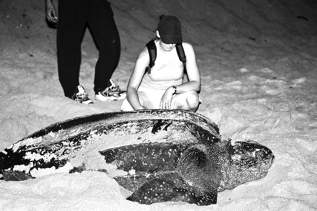 leatherback_scale_web