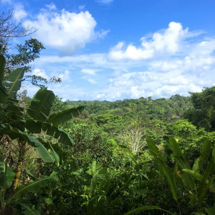 deep-jungle.jpg