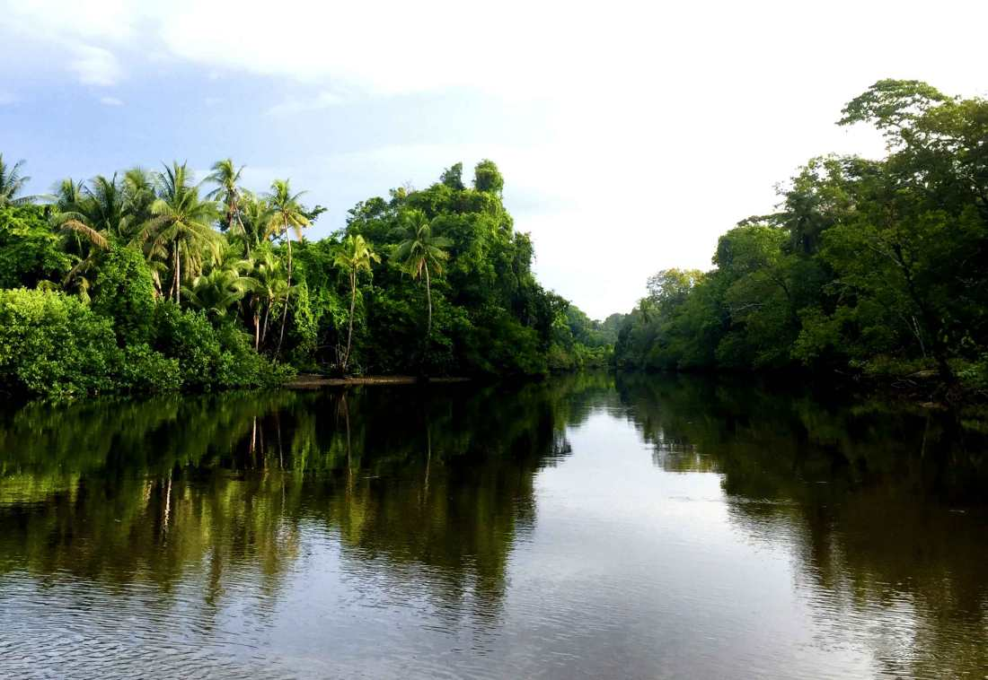corcovado-morning-river_web.jpg