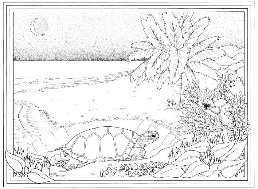 female-turtle-nesting_web.jpg