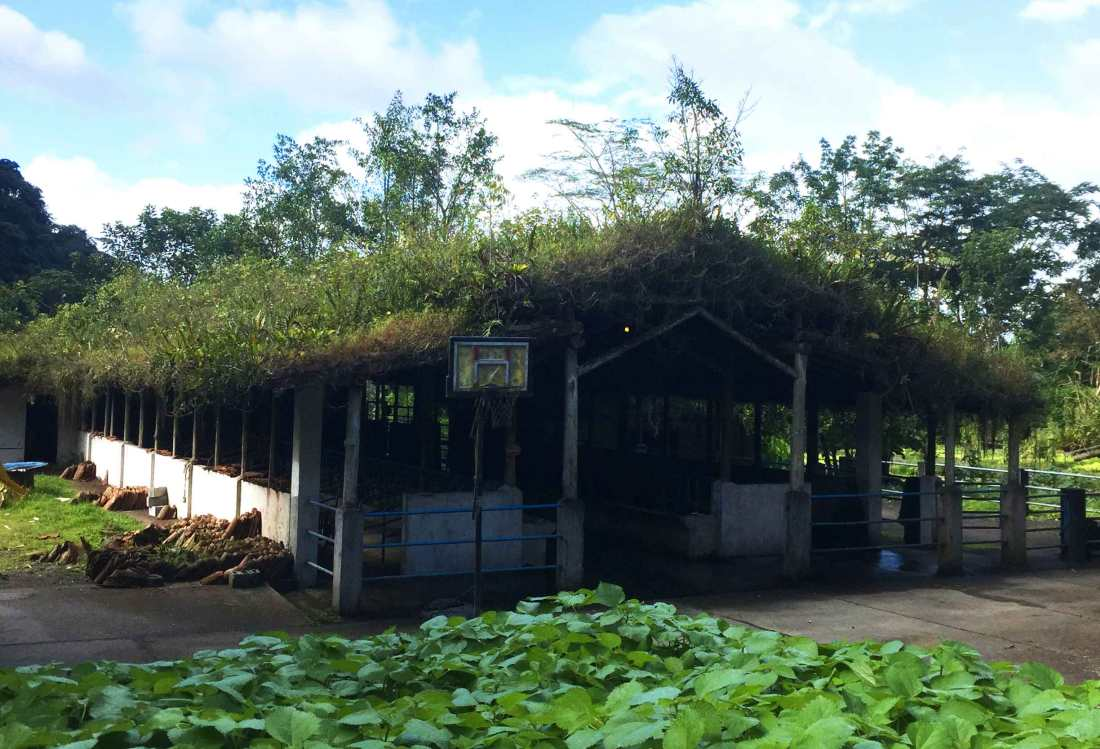 rancho-margot_green-roof