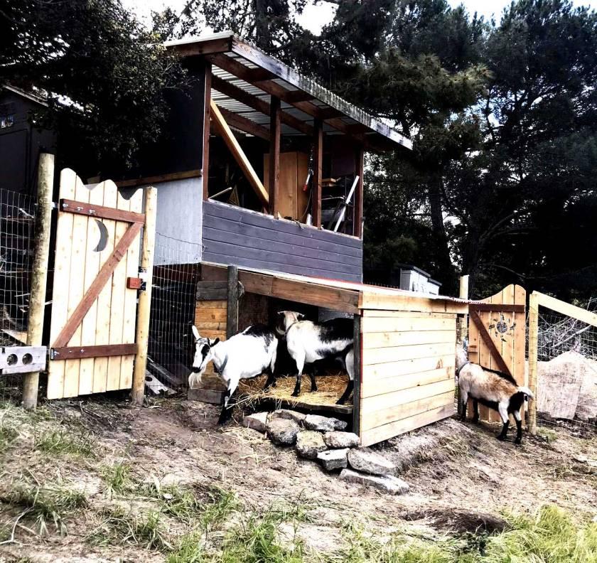 goat-pen_finished_web
